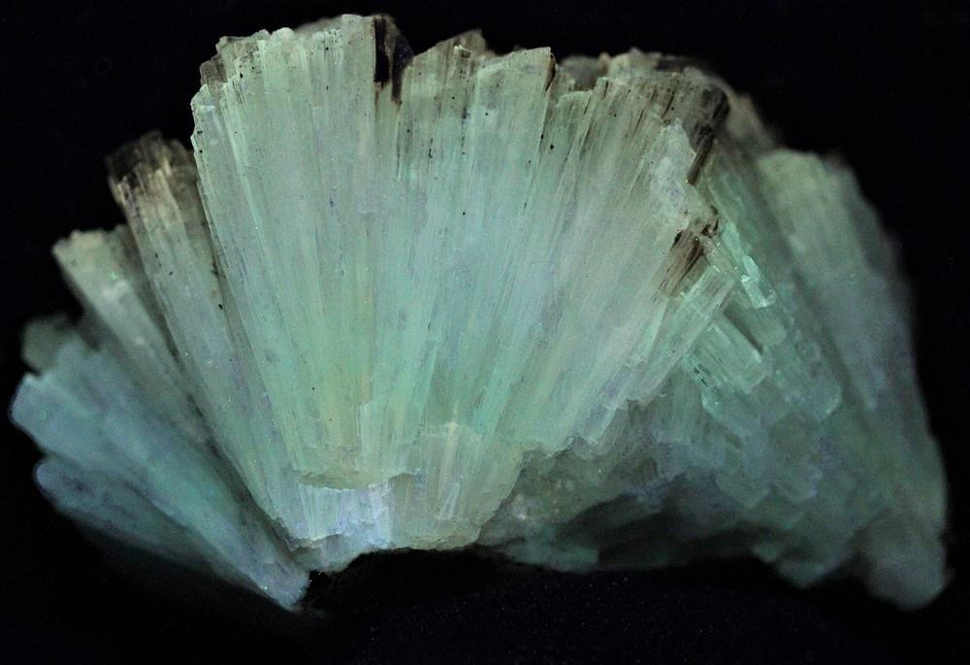 Aragonite crystals from the Sterling Hill Mine, Ogdensburg, NJ under shortwave UV Light