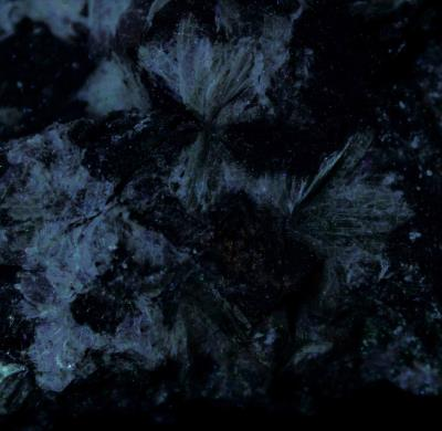 Margarite crystal sprays in franklin marble from the Franklin Quarry, Franklin, NJ under shortwave UV Light
